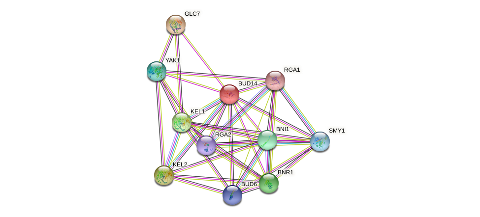 BUD14 protein (Saccharomyces cerevisiae) - STRING interaction network