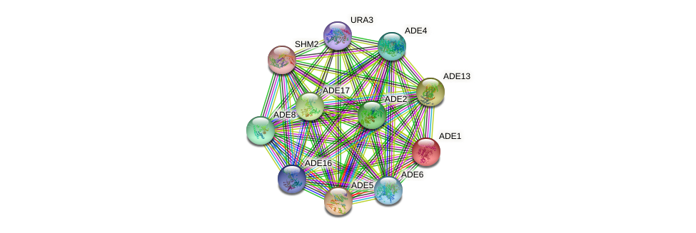 ADE1 protein (Saccharomyces cerevisiae) - STRING interaction network