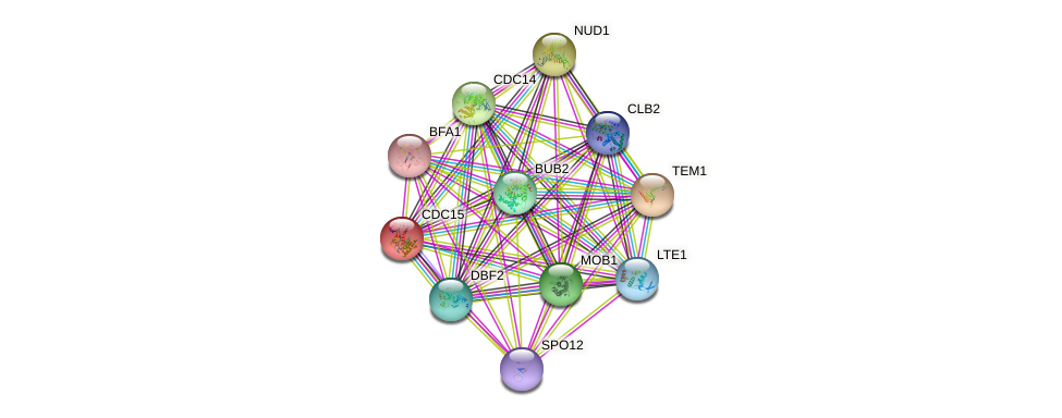 CDC15 protein (Saccharomyces cerevisiae) - STRING interaction network