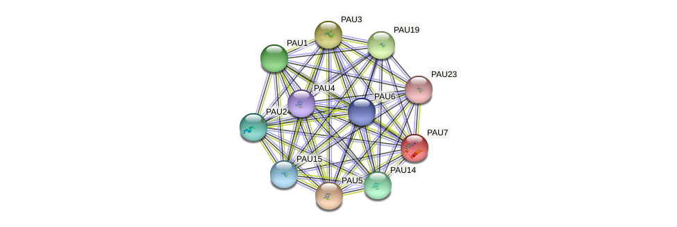 PAU7 protein (Saccharomyces cerevisiae) - STRING interaction network