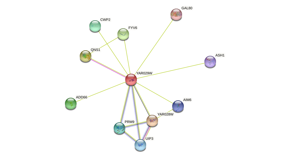 YAR029W protein (Saccharomyces cerevisiae) - STRING interaction network