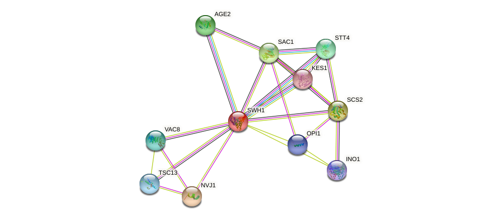 SWH1 protein (Saccharomyces cerevisiae) - STRING interaction network