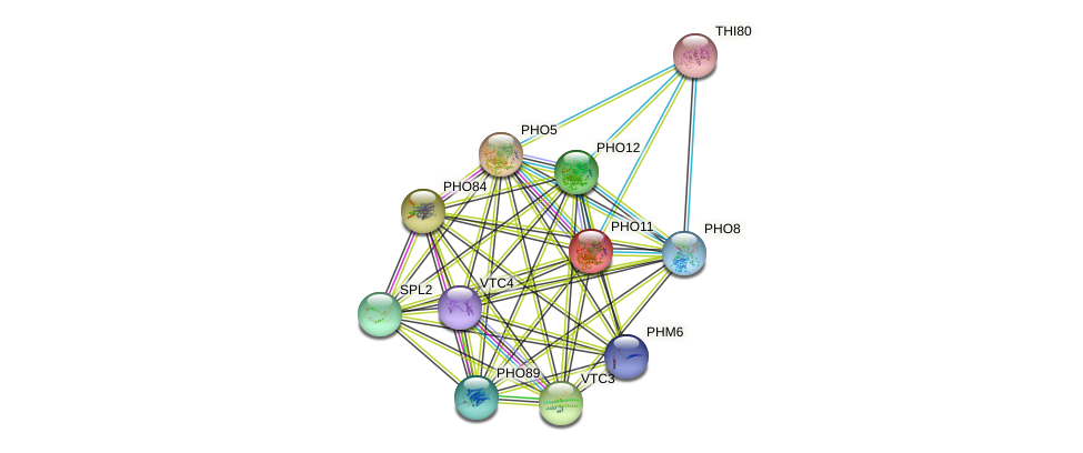 PHO11 protein (Saccharomyces cerevisiae) - STRING interaction network