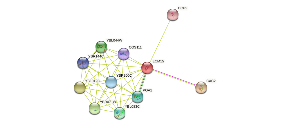 ECM15 protein (Saccharomyces cerevisiae) - STRING interaction network