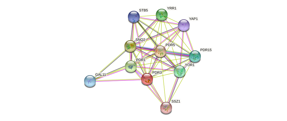 PDR3 protein (Saccharomyces cerevisiae) - STRING interaction network