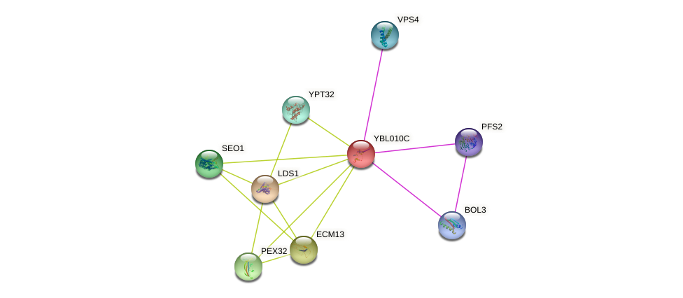 YBL010C protein (Saccharomyces cerevisiae) - STRING interaction network