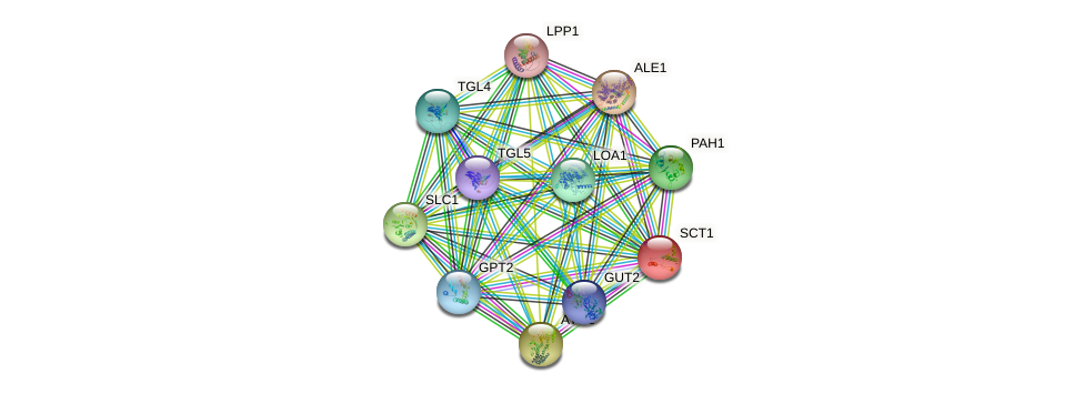 SCT1 protein (Saccharomyces cerevisiae) - STRING interaction network