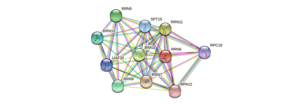 RRN6 protein (Saccharomyces cerevisiae) - STRING interaction network