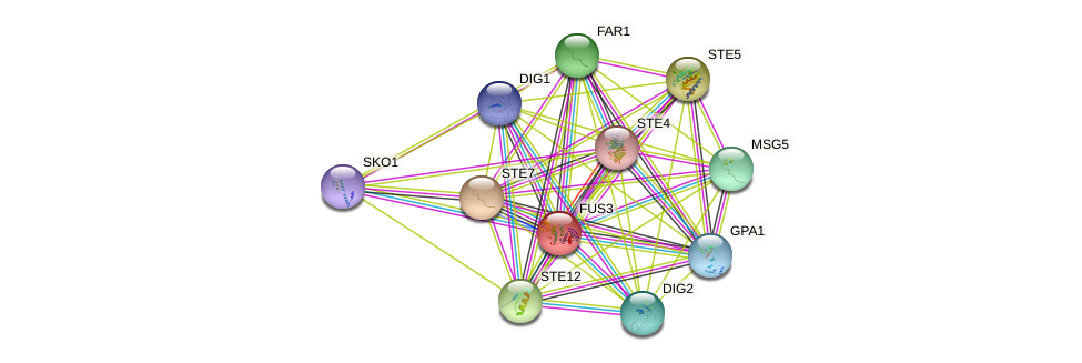 FUS3 protein (Saccharomyces cerevisiae) - STRING interaction network