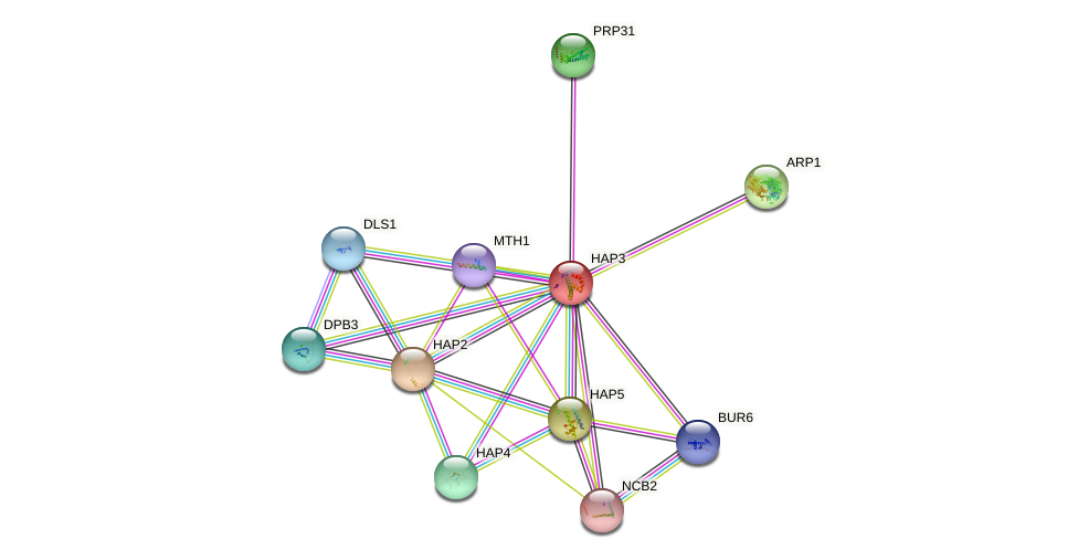 HAP3 protein (Saccharomyces cerevisiae) - STRING interaction network