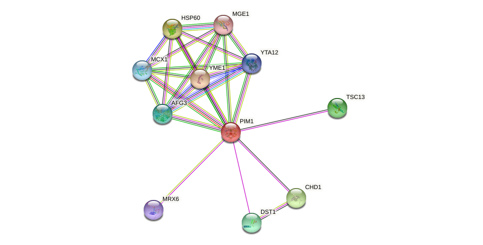 PIM1 protein (Saccharomyces cerevisiae) - STRING interaction network