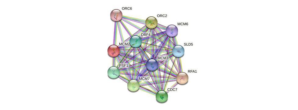 MCM2 protein (Saccharomyces cerevisiae) - STRING interaction network