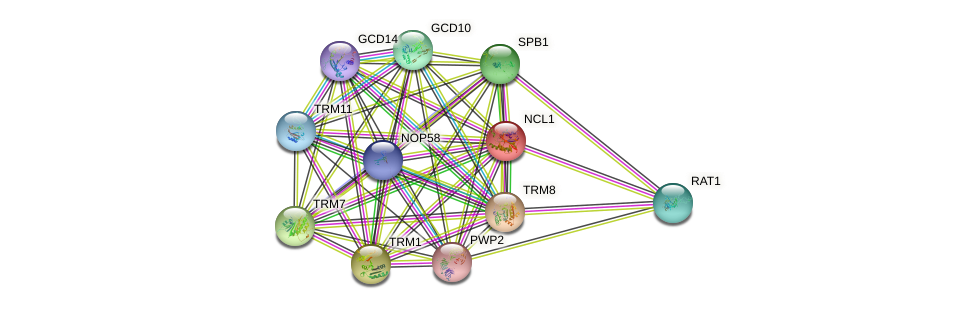 NCL1 protein (Saccharomyces cerevisiae) - STRING interaction network