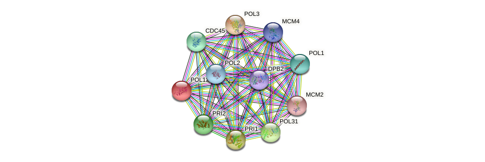 POL12 protein (Saccharomyces cerevisiae) - STRING interaction network