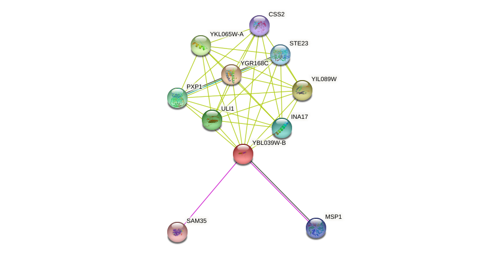 YBL039W-B protein (Saccharomyces cerevisiae) - STRING interaction network