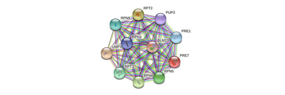 PRE7 protein (Saccharomyces cerevisiae) - STRING interaction network