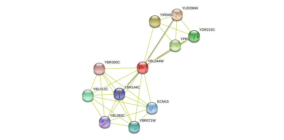 YBL044W protein (Saccharomyces cerevisiae) - STRING interaction network