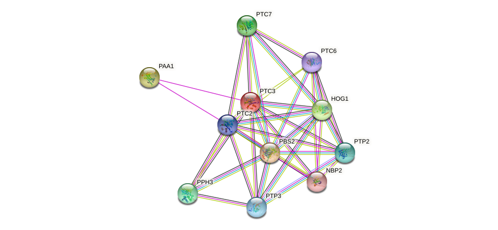 PTC3 protein (Saccharomyces cerevisiae) - STRING interaction network