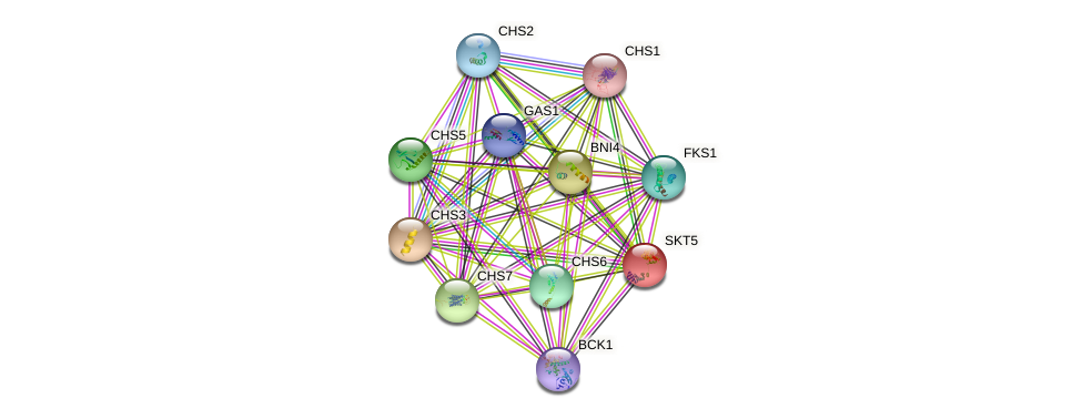 SKT5 protein (Saccharomyces cerevisiae) - STRING interaction network