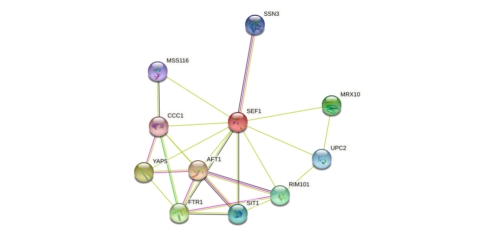 SEF1 protein (Saccharomyces cerevisiae) - STRING interaction network