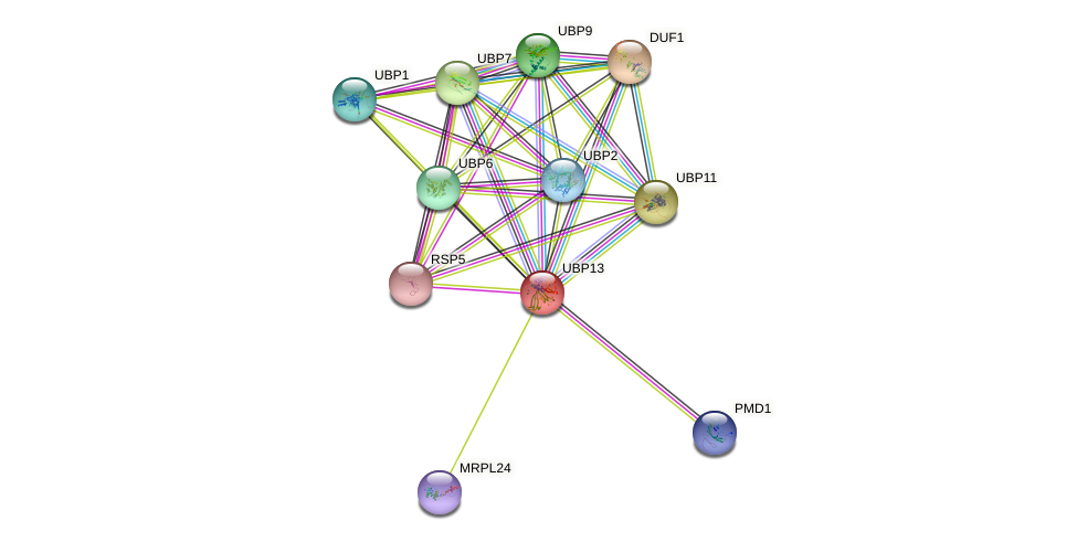 UBP13 protein (Saccharomyces cerevisiae) - STRING interaction network