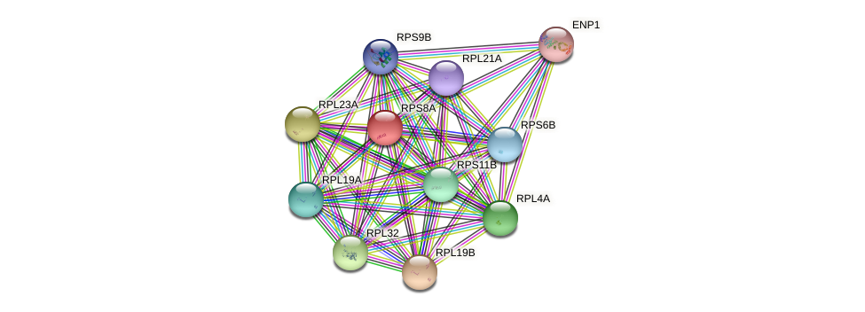 RPS8A protein (Saccharomyces cerevisiae) - STRING interaction network