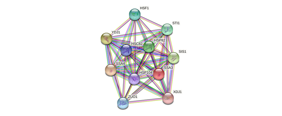 SSA3 protein (Saccharomyces cerevisiae) - STRING interaction network