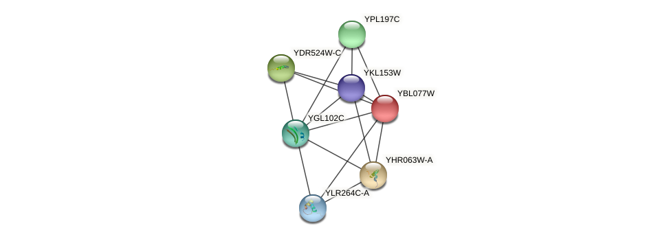 YBL077W protein (Saccharomyces cerevisiae) - STRING interaction network