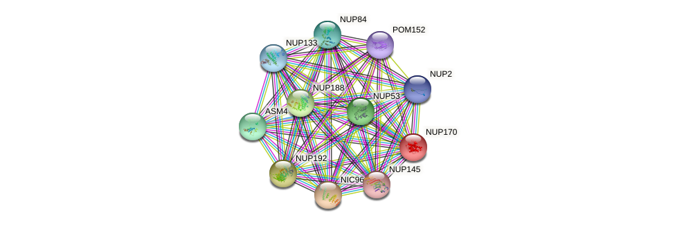 NUP170 protein (Saccharomyces cerevisiae) - STRING interaction network