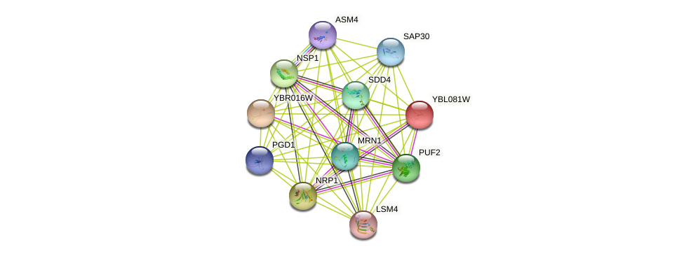 YBL081W protein (Saccharomyces cerevisiae) - STRING interaction network