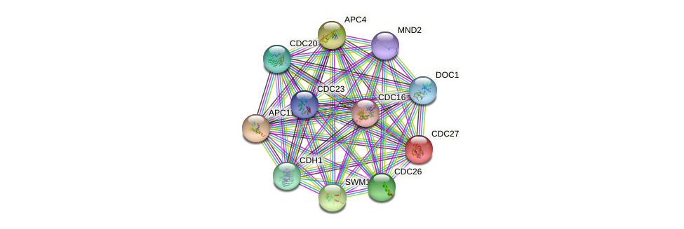 CDC27 protein (Saccharomyces cerevisiae) - STRING interaction network