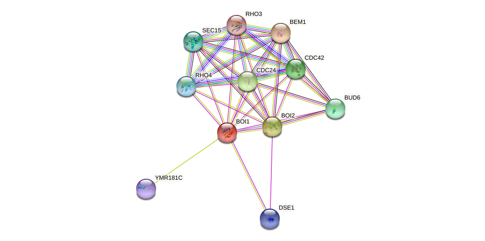 BOI1 protein (Saccharomyces cerevisiae) - STRING interaction network