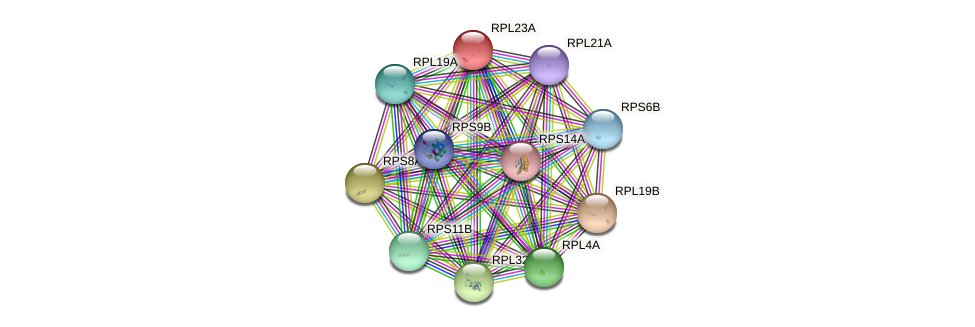 RPL23A protein (Saccharomyces cerevisiae) - STRING interaction network