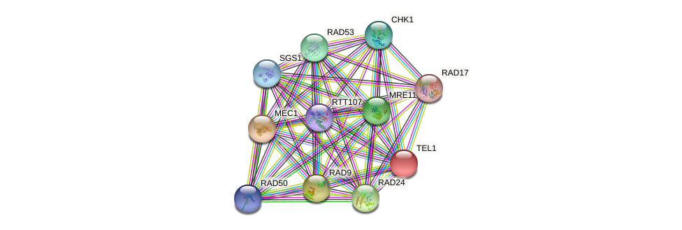 TEL1 protein (Saccharomyces cerevisiae) - STRING interaction network