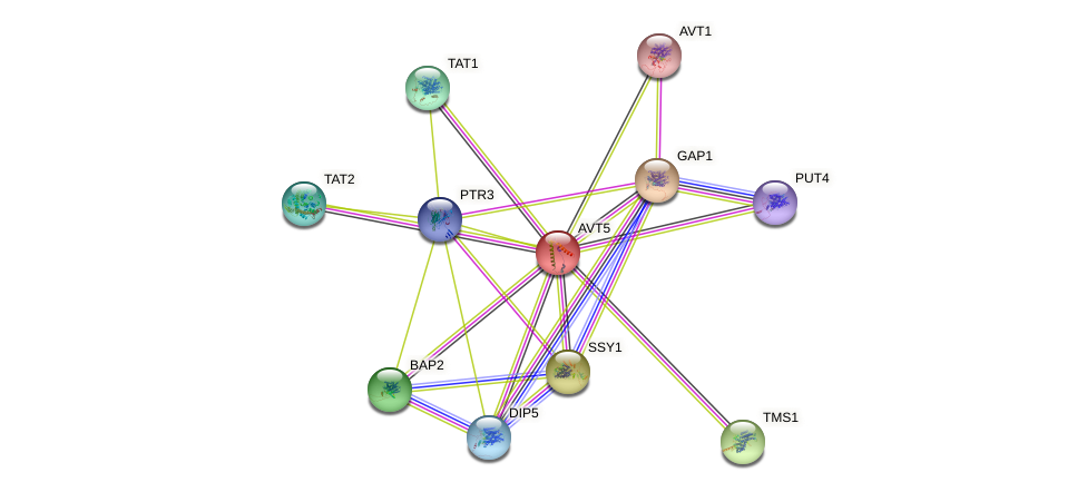 AVT5 protein (Saccharomyces cerevisiae) - STRING interaction network