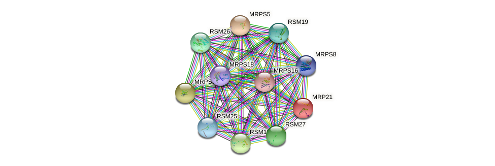 MRP21 protein (Saccharomyces cerevisiae) - STRING interaction network