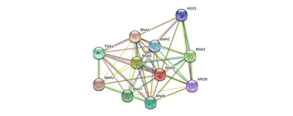 BNA4 protein (Saccharomyces cerevisiae) - STRING interaction network