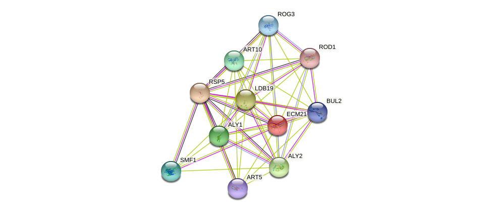 ECM21 protein (Saccharomyces cerevisiae) - STRING interaction network