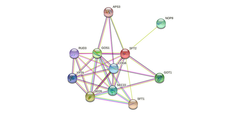 SFT2 protein (Saccharomyces cerevisiae) - STRING interaction network