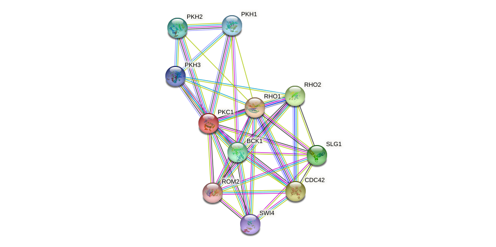 PKC1 protein (Saccharomyces cerevisiae) - STRING interaction network