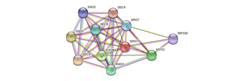 SRO77 protein (Saccharomyces cerevisiae) - STRING interaction network