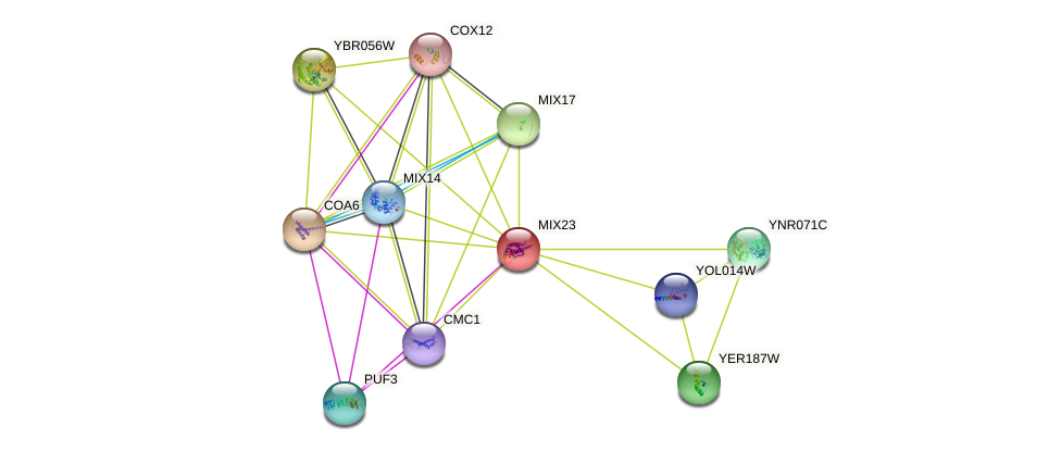MIX23 protein (Saccharomyces cerevisiae) - STRING interaction network