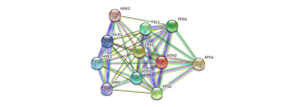 NTH2 protein (Saccharomyces cerevisiae) - STRING interaction network