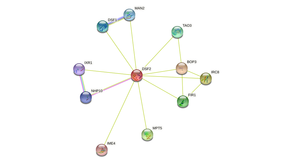 DSF2 protein (Saccharomyces cerevisiae) - STRING interaction network
