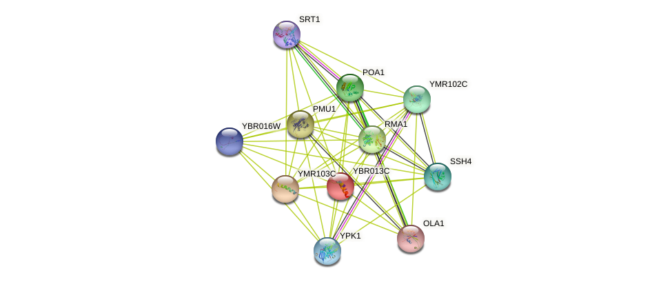 YBR013C protein (Saccharomyces cerevisiae) - STRING interaction network