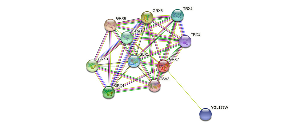 GRX7 protein (Saccharomyces cerevisiae) - STRING interaction network