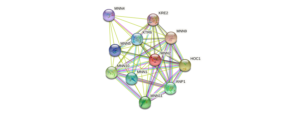 MNN2 protein (Saccharomyces cerevisiae) - STRING interaction network