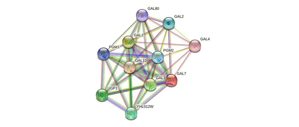 GAL7 protein (Saccharomyces cerevisiae) - STRING interaction network