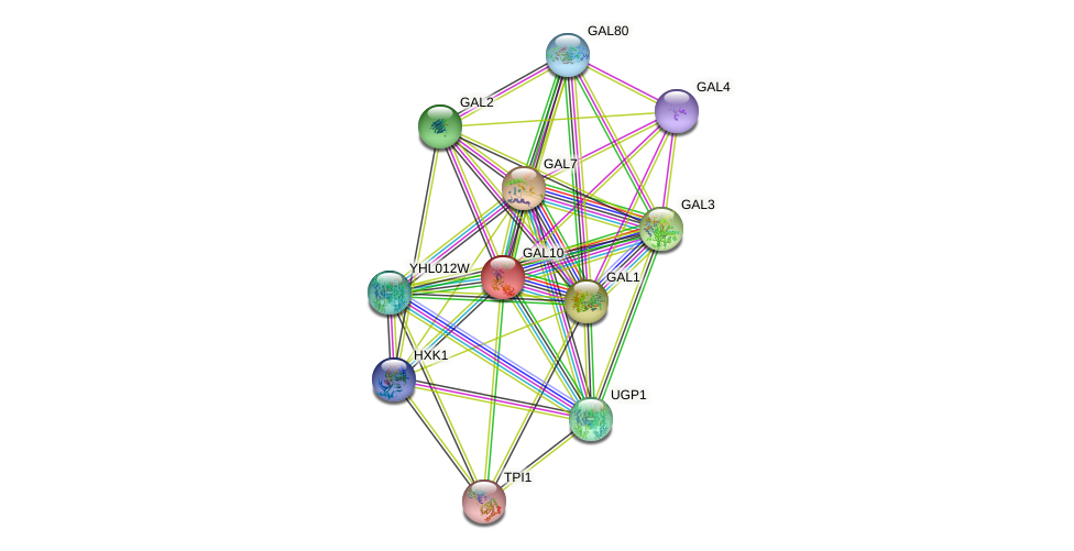 GAL10 protein (Saccharomyces cerevisiae) - STRING interaction network
