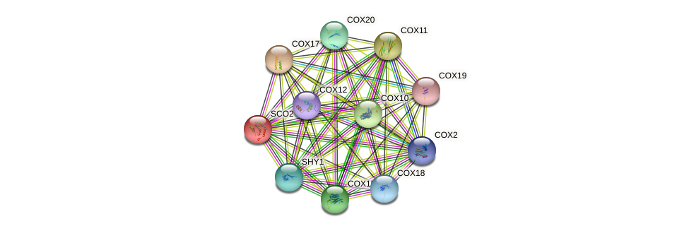 SCO2 protein (Saccharomyces cerevisiae) - STRING interaction network